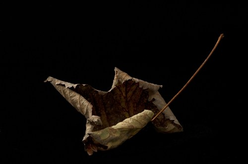 LEAF from the series SPENT