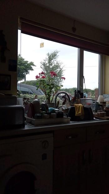 Watching from my kitchen window