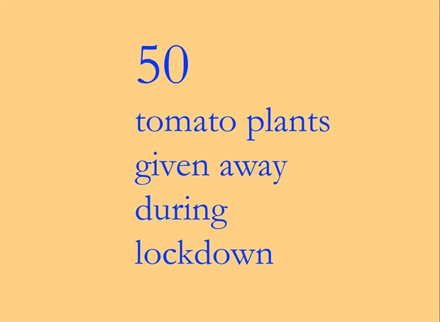 50 tomato plants given away during lockdown