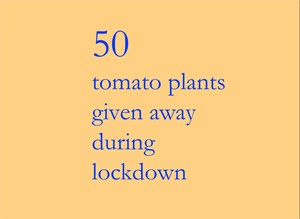 50 tomato plants given away during lockdown, by Julie Mecoli