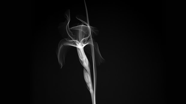 X-Ray Aesthetics