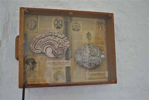 18th c. Brain Study