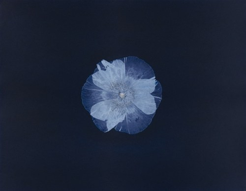 Poppy2-16