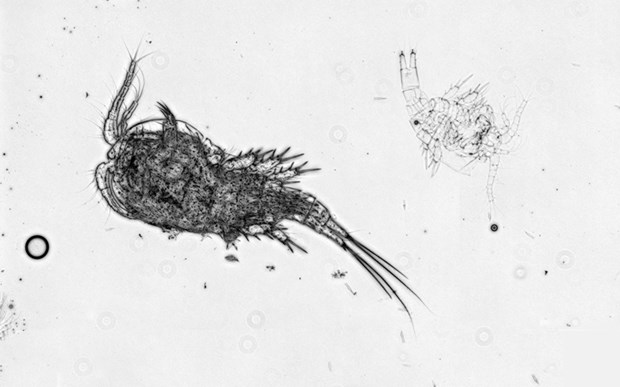 ADRIFT: FIELD NOTES: a survey of zooplankton adrift 200km of the Rideau Canal waterway.