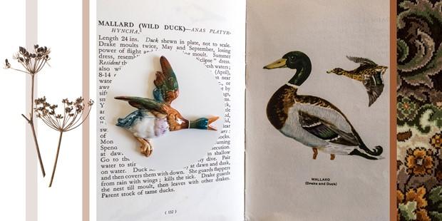 Last of the Ducks