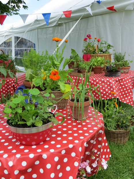 Pop-up garden is award winning success