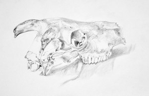 Skull, by Mary Sewell