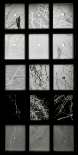 Branches - window panel