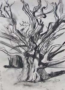 Sweet Chestnut tree at Dunsland (charcoal sketch), by Karen Howse
