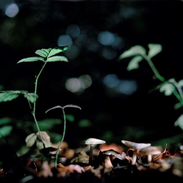 'Fungi' - Credit: ©Roy Mehta