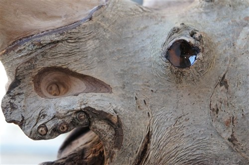 Fraxinus Bicornis (Ash Two Horn) - Credit: Charli Clark