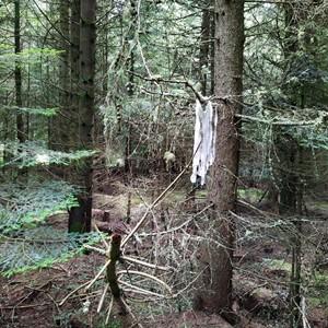 Farthest Reach - Mycileum Ritual, by Ewan Robertson