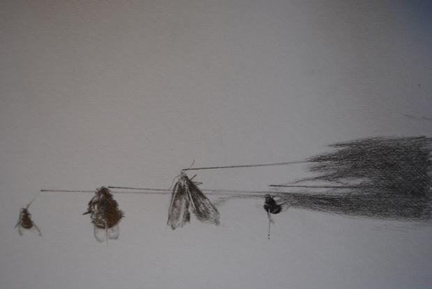 Entomology Drawings