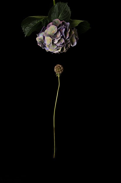 Untitled (2020, from the series Flora Dislocata)