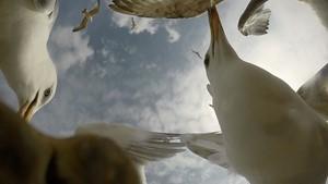 Herring Gulls, by Sophie Morton