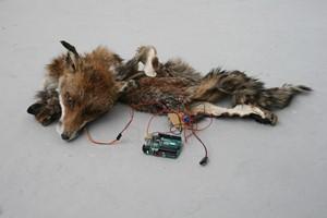 Animatronic Taxidermy Fox, by Sophie Morton