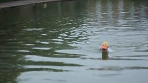 Pond Dregs