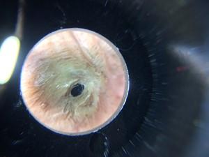 Pig Eye, by Carolyn Curtis Magri