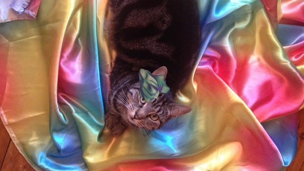 GIF Cat GIF