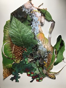 Ecopoetic Compositions i, by noelle genevier
