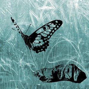 Butterfly Blue, by Stephen Calcutt