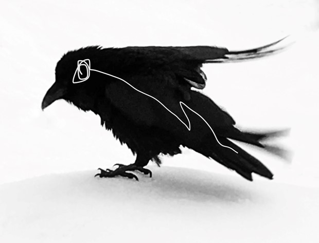 White Eyed Raven