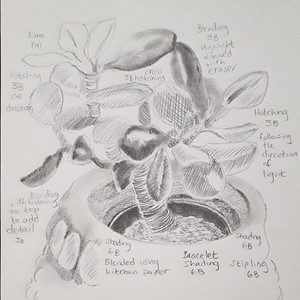 Introduction to Pencil Drawing, by Viv Owen