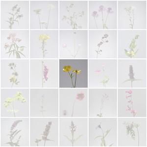 Meadow Study, by Anna Sellen
