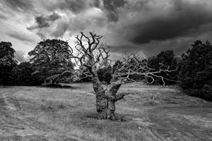 Deadwood, by Roy Barry